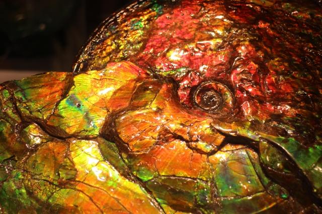 化石画像1